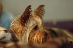 Jak radzić sobie z alergią na psa