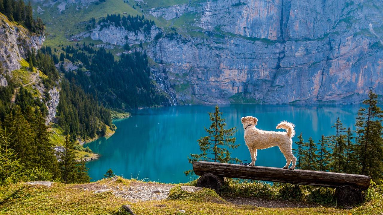 Udane wakacje ze zwierzakiem? To możliwe!